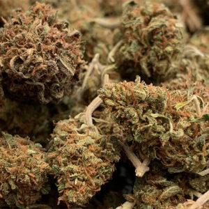 Cheese Cannabis Strain