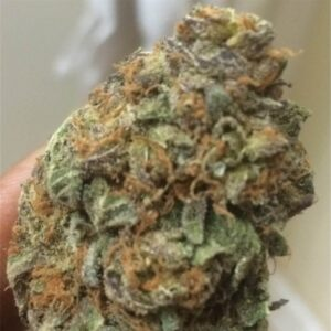Cookie Monster UK Cannabis Strain