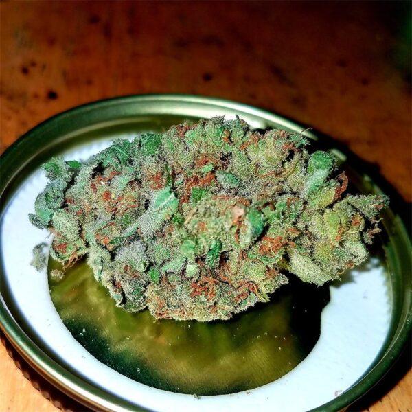 Loud Dream Cannabis Strain
