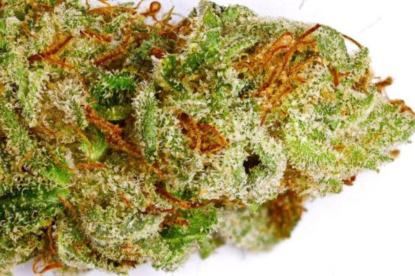 Sour OG Cannabis Strain