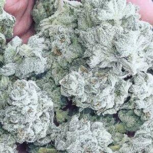 White Rhino Marijuana Strain UK