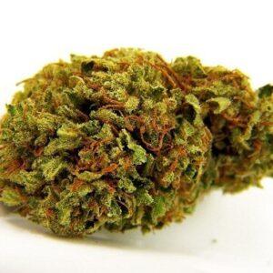 Tangie Biscotti Cannabis Strain UK