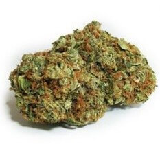 Super Girl Scout Cookies Strain