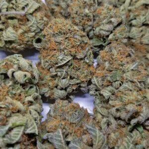 OG Buddha Tahoe Marijuana Strain