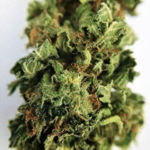 Buy Blaze Weed Strain UK