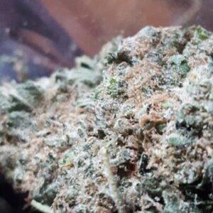 Space Dawg Weed Strain UK