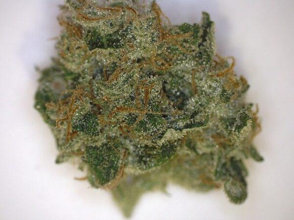 Trainwreck Weed Strain UK