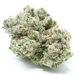 Original Glue Marijuana Strain UK
