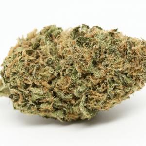 Critical Mass Weed Strain UK